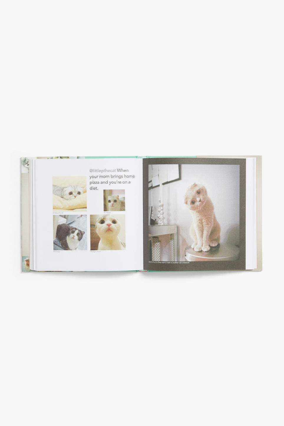 Detailed image of Monki cat book in white